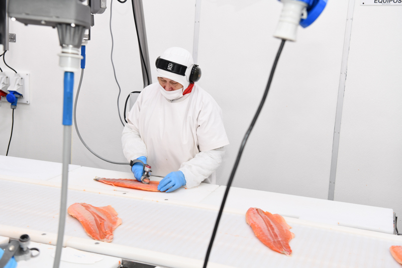 Salmon factory worker cutting a piece of salmon